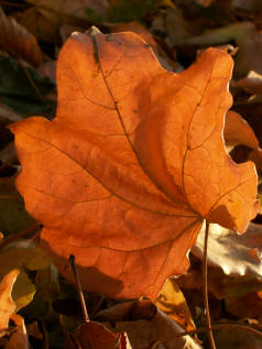 Sabian Symbol for Libra 25: Information in the symbol of an autumn leaf