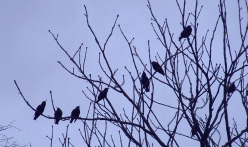 Sabian Symbol for Leo 28: Many little birds on a limb of a big tree