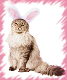 New Moon in Aquarius ~ Chinese New Year of the Cat or Rabbit