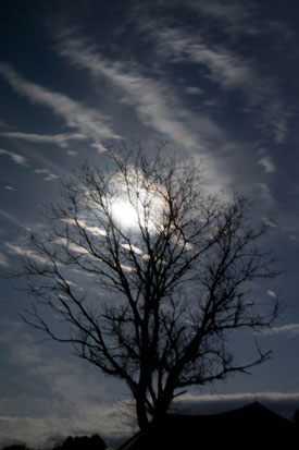 Bright Full Moon behind a tree