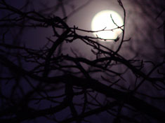Full Moon in Taurus through the branches